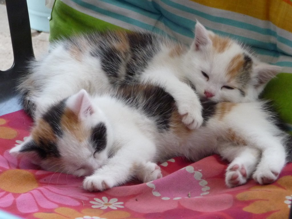 Kinder Katzen