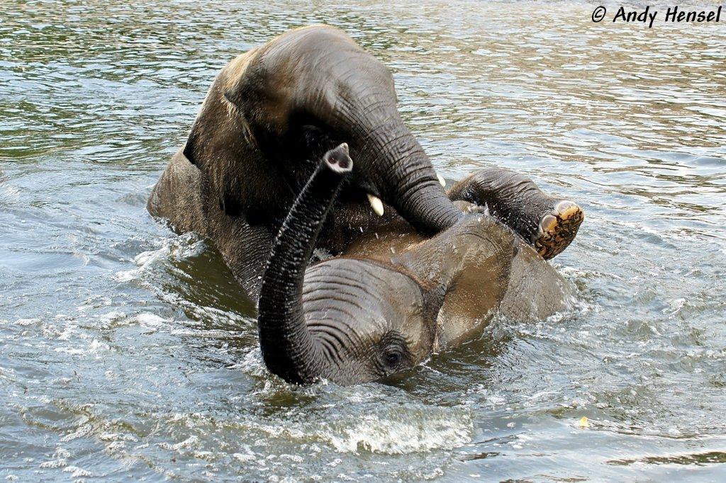 afrikanische elefanten fotos 2 tier. Black Bedroom Furniture Sets. Home Design Ideas